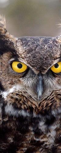 Цвет глаз совы зависит от образа жизни