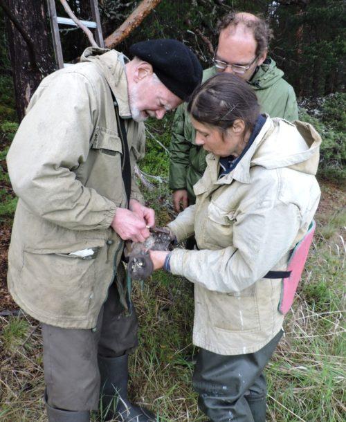 Виталий Бианки орнитолог