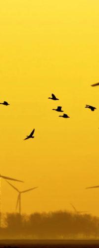 ИИ сделает ветряные мельницы безопаснее для птиц