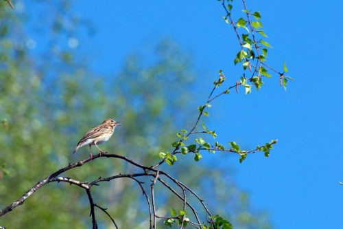 Весенние приметы про птиц