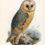 Иллюстрации из книги «Орнитологический сборник» (Ornithological miscellany)