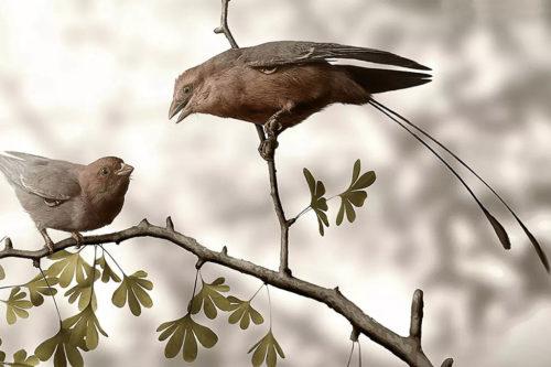 древние птицы Конфуциусорнис