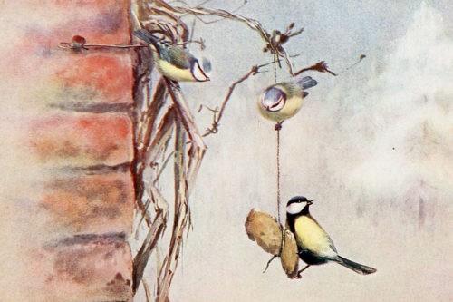 Иллюстрации птиц из книги The story of hedgerow and pond