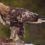 Птицы используют турбулентность для ускорения