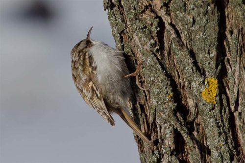 Пищуха: Мало летает, много карабкается по деревьям и никогда не ползает вниз