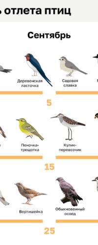 Календарь отлета птиц