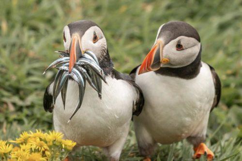 Подведены итоги Comedy Wildlife Photography Awards'2021
