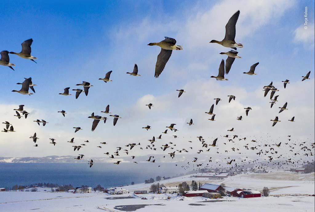 Победители Wildlife Photographer of the Year-2021