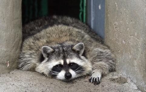 Мосгордума пропишет в законе правила содержания животных в кафе
