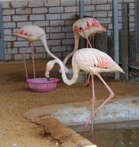 В Липецком зоопарке открыли двухэтажный дом для фламинго