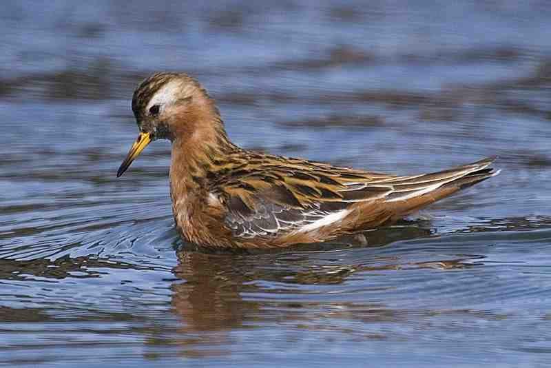 На Витебщине нашли 324-ю птицу Беларуси