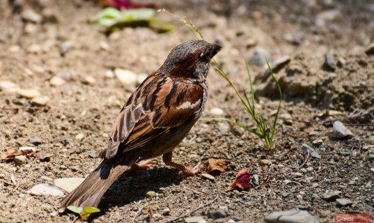 Перелетным птицам в олимпийском орнитопарке готовят идеальные условия
