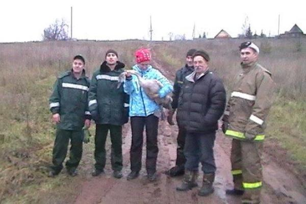 В Удмуртии лебедя с поврежденным крылом из пруда спасли пожарные