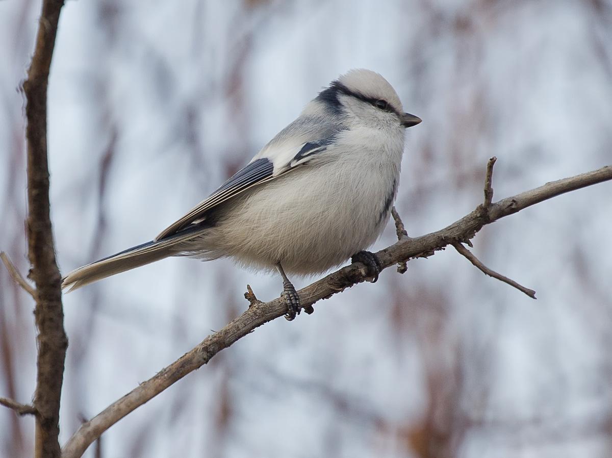 Спустя столетие в Крым вернулись редкие птицы