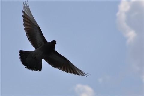 Птицы ориентируются по внутренней карте местности