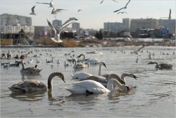 В Севастополе займутся подсчетом птиц в декабре