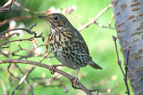 В Москве появятся вышки для прослушивания пения птиц