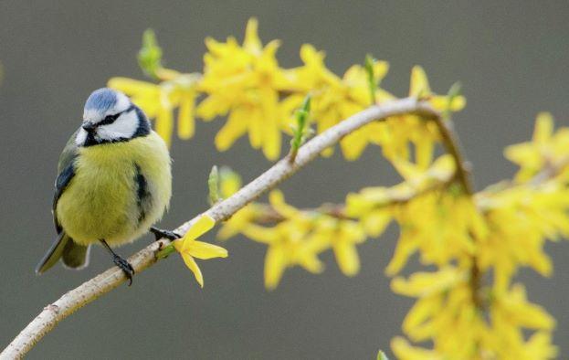 Птицы в городе легче переносят погодные аномалии, чем на природе