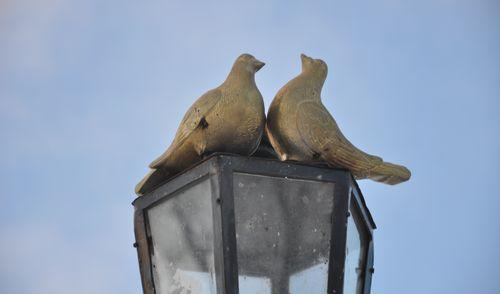 Памятник голубям появился в Ижевске