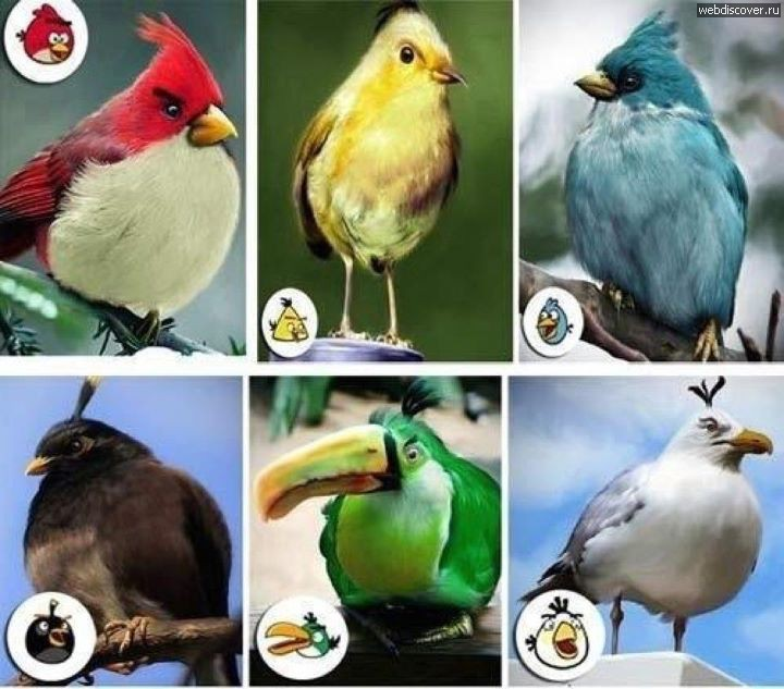 Реальные Angry birds