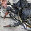 На Херсонщине ГосЧСники спасли пару аистов на очистных сооружениях