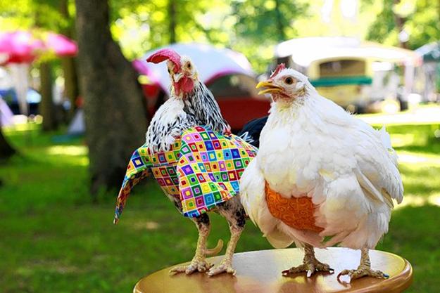 Куриные подгузники